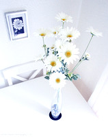 Table-top Daisies