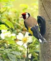 Flower, Finch and Feeders
